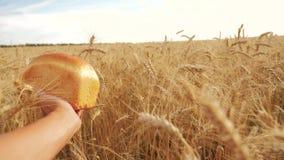 Το άτομο κρατά ένα ψωμί σε έναν τομέα σίτου σε αργή κίνηση βίντεο τρόπου ζωής επιτυχής χρονικός σίτος συγκομιδών πεδίων γεωπόνων  απόθεμα βίντεο