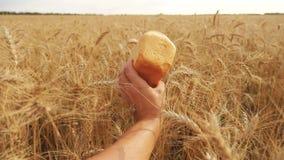Το άτομο κρατά ένα ψωμί σε έναν τομέα τρόπου ζωής σίτου σε αργή κίνηση βίντεο επιτυχής χρονικός σίτος συγκομιδών πεδίων γεωπόνων  φιλμ μικρού μήκους