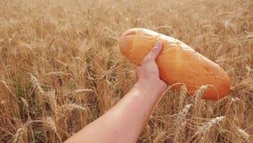 το άτομο κρατά μια φραντζόλα ψωμιού σε έναν τομέα σίτου σε αργή κίνηση βίντεο επιτυχής χρονικός σίτος συγκομιδών πεδίων γεωπόνων  απόθεμα βίντεο