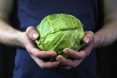 Το άτομο κρατά τα χέρια με τη συγκομισμένη συγκομιδή πράσινων λάχανων Στοκ εικόνα με δικαίωμα ελεύθερης χρήσης
