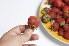 Το άτομο κρατά τη φράουλα στο χέρι του Κρατά το χέρι της σε ένα πιάτο των φραουλών Επόμενο πιάτο με τα βερίκοκα και το μήλο Στοκ φωτογραφία με δικαίωμα ελεύθερης χρήσης