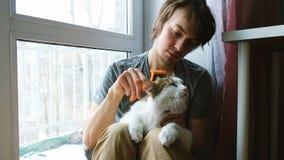 Το άτομο κτενίζει έξω μια άσπρη γάτα Ένα άτομο φροντίζει μια συνεδρίαση γατών στο πάτωμα στο σπίτι, σε αργή κίνηση απόθεμα βίντεο