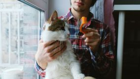 Το άτομο κτενίζει έξω μια άσπρη γάτα Ένα άτομο φροντίζει τη συνεδρίαση γουνών μιας γάτας στο πάτωμα στο σπίτι απόθεμα βίντεο