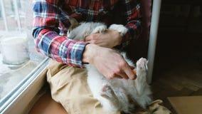 Το άτομο κτενίζει έξω τη γάτα Ένα άτομο φροντίζει τη συνεδρίαση γουνών μιας γάτας στο πάτωμα στο σπίτι απόθεμα βίντεο