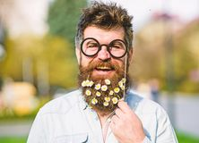 Το άτομο με τη μακριά γενειάδα και mustache, το υπόβαθρο φύσης Ο τύπος κοιτάζει ωραία με τη μαργαρίτα ή τα chamomile λουλούδια στ στοκ φωτογραφία με δικαίωμα ελεύθερης χρήσης
