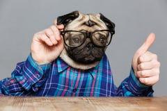 Το άτομο με το κεφάλι σκυλιών μαλαγμένου πηλού στην παρουσίαση γυαλιών φυλλομετρεί επάνω Στοκ Εικόνα