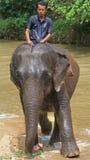 Το άτομο οδηγά τον ελέφαντα στην Κουάλα Gandah, Μαλαισία Στοκ φωτογραφίες με δικαίωμα ελεύθερης χρήσης