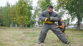 Το άτομο σε ένα προστατευτικό κοστούμι προγυμνάζει το σκυλί ποιμένων του που επιτίθεται φιλμ μικρού μήκους