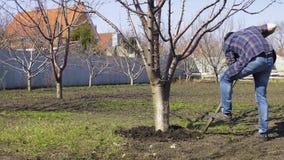 Το άτομο σκάβει ένα δέντρο χρησιμοποιεί την άνοιξη ένα φτυάρι απόθεμα βίντεο
