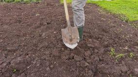 Το άτομο σκάβει το έδαφος με το φτυάρι απόθεμα βίντεο