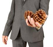 Το άτομο στο γκρίζο κοστούμι κρατά δύο κώνους πεύκων Στοκ Φωτογραφίες