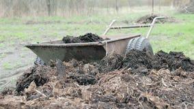 Το άτομο φορτώνει το οργανικό λίπασμα wheelbarrow καλλιεργεί μόνος του Χειρωνακτική εργασία απόθεμα βίντεο