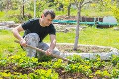 Το άτομο χαλαρώνει το έδαφος κάτω από τις φράουλες στο θερινό εξοχικό σπίτι τους Στοκ Φωτογραφίες