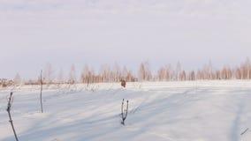 Το άτομο το χειμώνα ντύνει γρήγορα να οδηγήσει και να ελιχτεί στο μίνι όχημα για το χιόνι βαθιά snowdrifts απόθεμα βίντεο