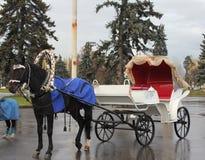 Το άλογο έβαλε στην άσπρη μεταφορά με μια κόκκινη ταπετσαρία από μέσα από Στοκ φωτογραφία με δικαίωμα ελεύθερης χρήσης