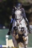 Το άλογο αναβατών παρουσιάζει πηδώντας δράση Στοκ Φωτογραφία