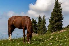 Το άλογο βόσκει σε ένα λιβάδι βουνών στο υπόβαθρο των όμορφων σύννεφων Στοκ φωτογραφία με δικαίωμα ελεύθερης χρήσης