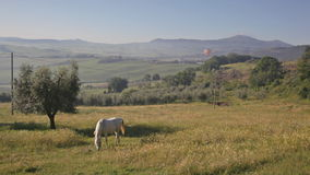 Το άλογο είναι βοημένο σε ένα λιβάδι φιλμ μικρού μήκους