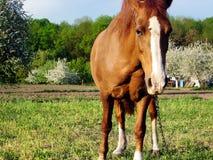Το άλογο θέματος Στοκ φωτογραφίες με δικαίωμα ελεύθερης χρήσης