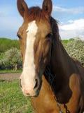 Το άλογο θέματος Στοκ εικόνες με δικαίωμα ελεύθερης χρήσης