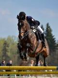 Το άλογο παρουσιάζει άλμα Στοκ Φωτογραφίες