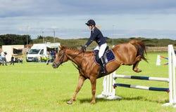 Το άλογο παρουσιάζει πηδώντας γεγονός gymkhana Στοκ Φωτογραφία