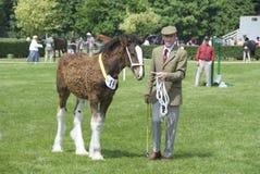 Το άλογο παρουσιάζει στοκ φωτογραφία με δικαίωμα ελεύθερης χρήσης