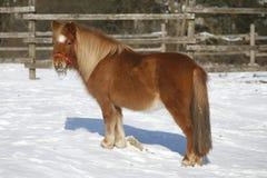 Το άλογο πόνι το χειμώνα συγκεντρώνει την αγροτική σκηνή Στοκ Εικόνα