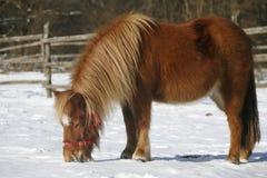 Το άλογο πόνι το χειμώνα συγκεντρώνει την αγροτική σκηνή Στοκ εικόνα με δικαίωμα ελεύθερης χρήσης