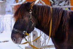 Το άλογο στην έκθεση στη δυτική Ουκρανία Στοκ Φωτογραφία