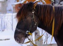 Το άλογο στην έκθεση στη δυτική Ουκρανία Στοκ εικόνες με δικαίωμα ελεύθερης χρήσης