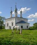 Το άλογο στηρίζεται από την παλαιά εκκλησία Στοκ εικόνα με δικαίωμα ελεύθερης χρήσης