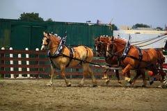 Το άλογο σχεδίων παρουσιάζει Στοκ Εικόνες