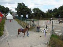 Το άλογο της Νορμανδίας παρουσιάζει Στοκ Εικόνες