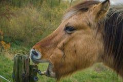 Το άλογο τρώει το ξύλο στις Κάτω Χώρες Στοκ εικόνα με δικαίωμα ελεύθερης χρήσης
