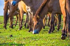 Το άλογο Στοκ Εικόνα