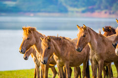 Το άλογο Στοκ φωτογραφία με δικαίωμα ελεύθερης χρήσης