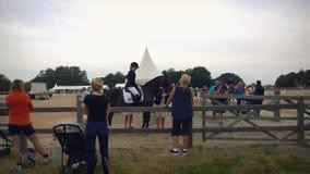 Το άλογο Malmö παρουσιάζει Στοκ Φωτογραφία