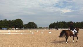 Το άλογο Malmö παρουσιάζει Στοκ Φωτογραφίες