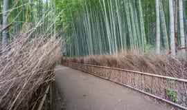 Το άλσος μπαμπού Arashiyama του Κιότο, Ιαπωνία Στοκ φωτογραφία με δικαίωμα ελεύθερης χρήσης
