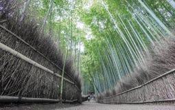 Το άλσος μπαμπού Arashiyama του Κιότο, Ιαπωνία Στοκ φωτογραφίες με δικαίωμα ελεύθερης χρήσης