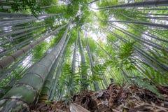 Το άλσος μπαμπού Arashiyama του Κιότο, Ιαπωνία Στοκ εικόνα με δικαίωμα ελεύθερης χρήσης