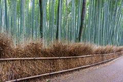 Το άλσος μπαμπού Arashiyama του Κιότο, Ιαπωνία Στοκ εικόνες με δικαίωμα ελεύθερης χρήσης