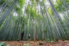 Το άλσος μπαμπού Arashiyama του Κιότο με τους θολωμένους τουρίστες, Ιαπωνία Στοκ Εικόνες