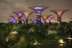 Το άλσος Supertree τη νύχτα, κήποι από τον κόλπο, Σιγκαπούρη Στοκ Εικόνες