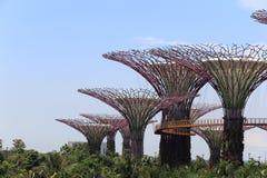 Το άλσος Supertrees στους κήπους από τον κόλπο στοκ εικόνα