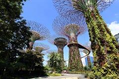 Το άλσος Supertrees στους κήπους από τον κόλπο στοκ εικόνες