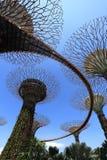 Το άλσος Supertrees στους κήπους από τον κόλπο στοκ φωτογραφίες