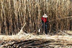 Το έγκαυμα φυτειών ζαχαροκάλαμων και ο εργαζόμενος, αγρόκτημα φυτειών ζαχαροκάλαμων, εργαζόμενοι κόβουν τον κάλαμο ζάχαρης, γεωργ στοκ εικόνες με δικαίωμα ελεύθερης χρήσης