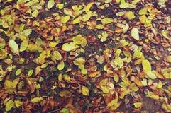 το έδαφος ημέρας φθινοπώρου αφήνει ηλιόλουστος Στοκ εικόνα με δικαίωμα ελεύθερης χρήσης